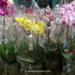 Orchid with Bromeliad Costco 2